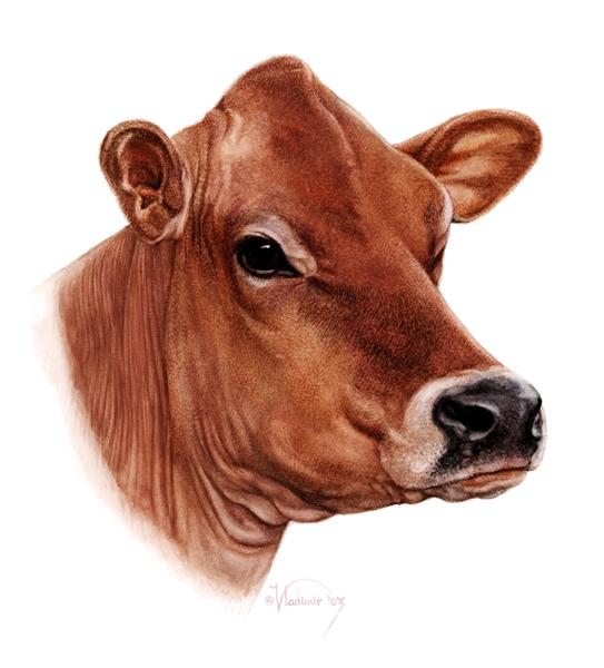 Jersey Cow Farm logo